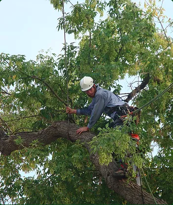 Our specialist removing a tree for a home in Boise